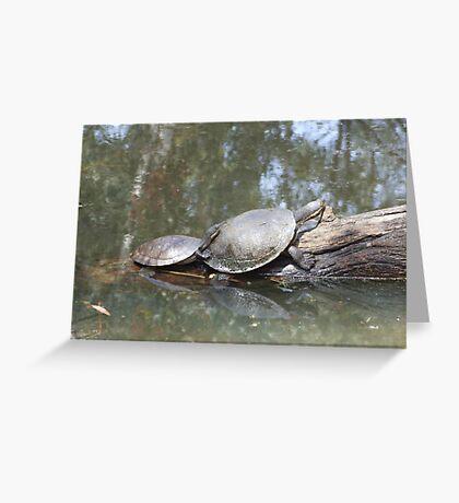 Macquarie Turtle Greeting Card