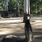 An Aussie Emu. by Maureen Dodd