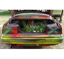 Herbs !! Photographic Print