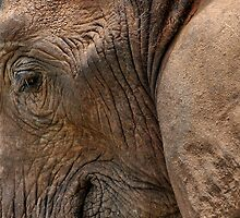 Elephant close-up by Erika Gouws