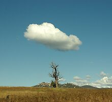 cloudy tree by halogen