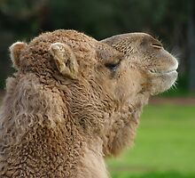 Werribee Open Range Zoo Series by Wzard