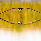 Winged Echo by Janet Fikar