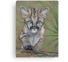 cute baby cougar big cat wildlife  Canvas Print