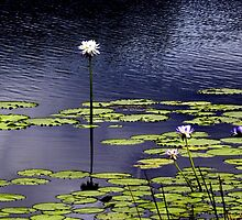Lilies straight and tall by Noeline R