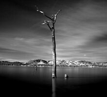 Lake Hume B&W Tree by John Vandeven