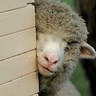 Peeking Boy - Yarck by Rachael Taylor