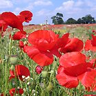 Poppies up close and personal by hjaynefoster
