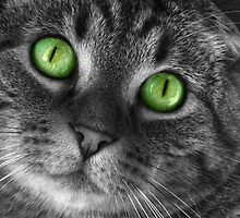 Emerald Eyes by EagleHunter
