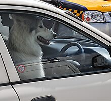 Pooch  Mobile - Volvo Driver ? by Michael Tapping