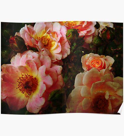 Vintage Roses. Poster