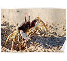 Scaredy Crab  Poster