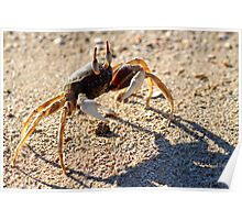 Horn-Eyed Ghost Crab Poster