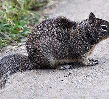He's a Little Squirrely Today by Bob Hortman