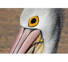 Pelican Eye Photographic Print