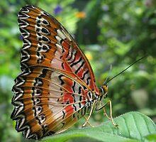 Malaysian Lacewing by David Tiller