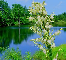 Yucca Blooms on the Lake by barnsis