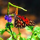 Viceroy: orange, black butterfly on blue Porter Weed 229 by michaelBstone