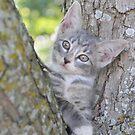 Barn Kitten Hangin' Out by EmmaLeigh