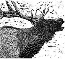 Woodcut Bull Elk Photographic Print