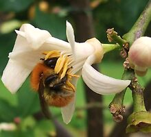 Lunch Time for the bees by MichelleRees