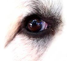 Eye of Dog by Gothamwood