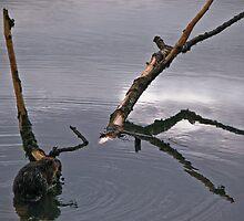 natural habitat 2 by Bruce  Dickson