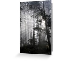 Light Must Have It's Way Greeting Card