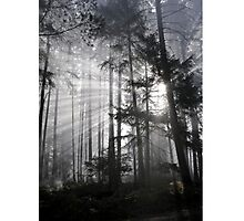 Light Must Have It's Way Photographic Print