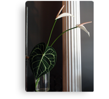 Lily Leaf Canvas Print
