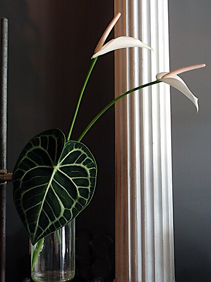 Lily Leaf by DarylE