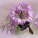 Pollen Gatherer by CarolM