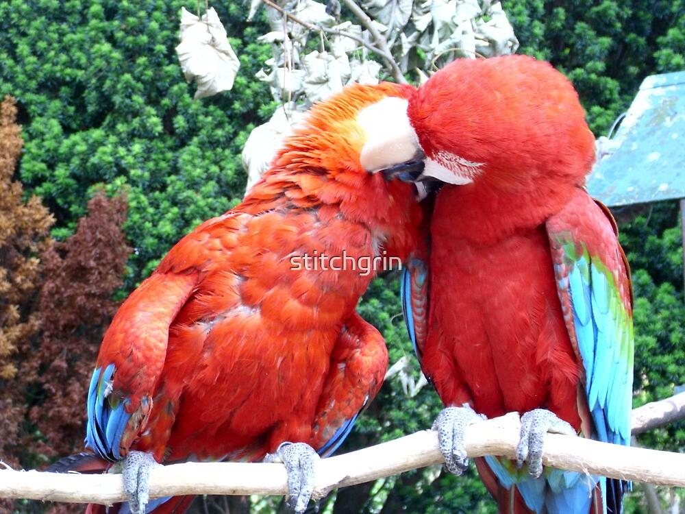 Birdy love awww by stitchgrin