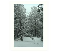 Snowing in Mt Disappointment Forest Art Print