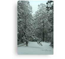 Snowing in Mt Disappointment Forest Canvas Print