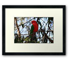 Male King Parrot Framed Print