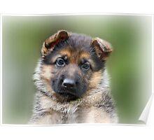 Puppy Portrait Poster