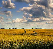 Canola Splendour!!! by Larry Trupp