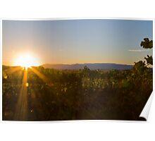Harvest Sunrise Poster