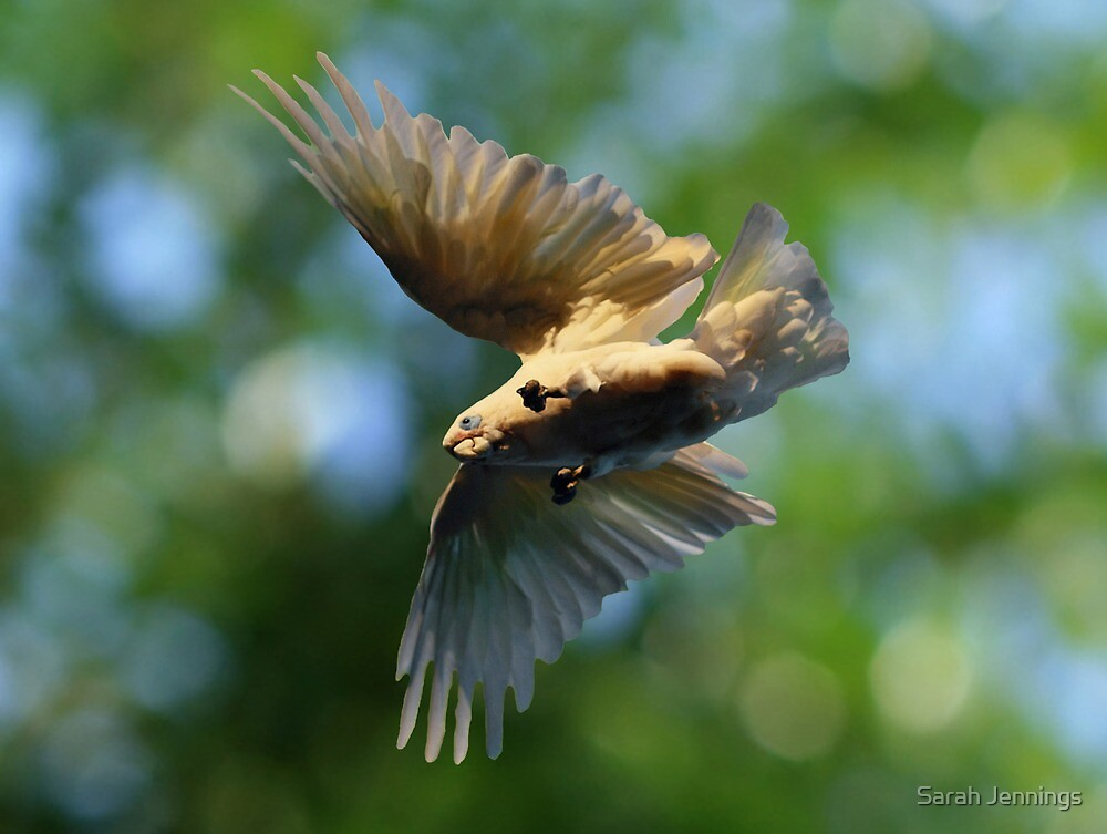 Spread Your Wings by Sarah Jennings