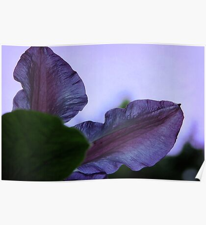 Black Forest Morning Glory Poster
