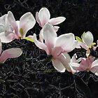 Black Magnolia by Sarah McKoy