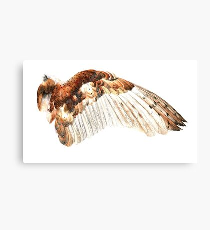 Barn Owl Wing Canvas Print