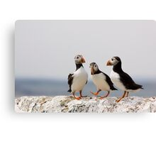 A Puffin Meeting Canvas Print