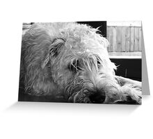 When's dinner!! Greeting Card