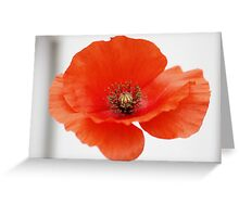 The Common Poppy Greeting Card
