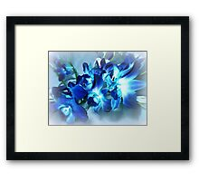 Singapore Orchids- in Blue Framed Print
