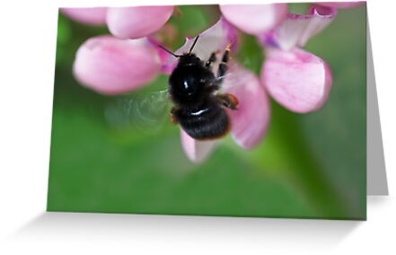 Red tailed bumble bee by inkedsandra