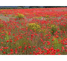 Another local poppy field Photographic Print