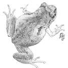 McDonald's Frog (ink detail) by Laura Grogan